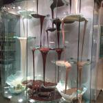 Foto de Bellagio Chocolate Fountain