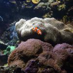 National Aquarium, Baltimore Foto