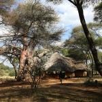 Sanctuary Swala Foto