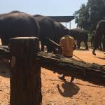 Pinnawala Elephant Orphanage Photo