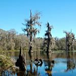 Wakulla Springs State Park, Bootstour