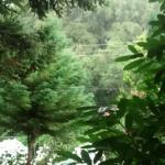 Photo de Refugio Peninsula