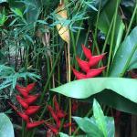 Foto de Nayara Hotel, Spa & Gardens
