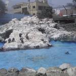 parque de las leyendas .....el balneario de los pinguinos