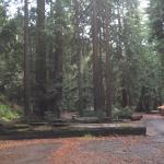 Big Sur Campground & Cabins Foto