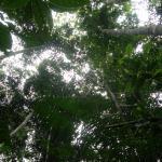 Tapiche Reserve Aufnahme