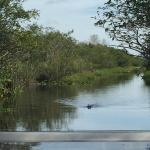 Coopertown Airboats Photo