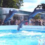Photo de Kujukushima Aquarium Umikirara