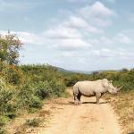 Shamwari Game Reserve Lodges صورة فوتوغرافية