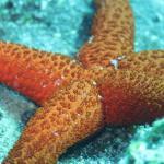 Aquaholics Dive Centre Foto