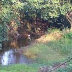 The nearby brook