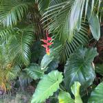 Photo de Playa Esmeralda Beach Resort