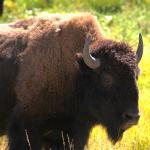 Foto de Jackson Hole Wildlife Safaris - Day Tours