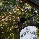 Foto de The Bakery Cafe