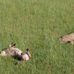 Photo de Julius Tact Safaris - Private Day Trips