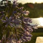 Rosendal Winery & Wellness Retreat Foto