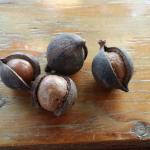 Foto de Tropical Farms Macadamia Nut Farm and Farm Tour