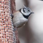 写真Highland Wildlife & Birdwatch Safaris枚