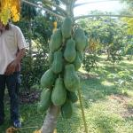 Tropical Fruit Farm Foto
