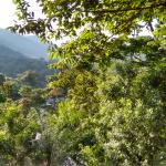 Buhoma Lodge Foto