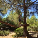 Jungle Parc Photo