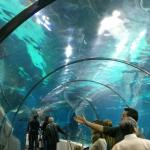L'Aquarium de Barcelona Photo