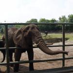 Serengeti-Park Hodenhagen Foto