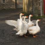 Wiltonburn Farm Foto