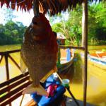 Muyuna Amazon Lodge Foto