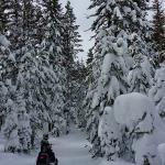 Lake Tahoe Snowmobile Tours Foto