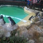Photo de Penguin Island