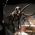 Photo de The Field Museum
