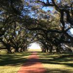 Foto de Oak Alley Plantation