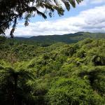 Waimangu Volcanic Valley Foto