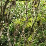 Foto de Lancetilla Botanical Garden
