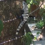 St. George's Caye Resort