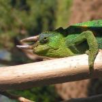 Bwindi Impenetrable National Park Foto