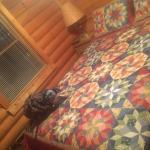 Avenair Mtn Cabin Rentals Photo