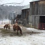 Sugarbush Farm Foto