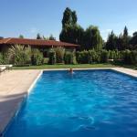Swimming pool among the vines