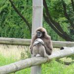 Photo de Tierpark