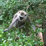 Monkeys outside the room