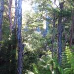 Kanuka Ridge Abel Tasman Backpackers Image