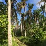 Photo de Vanuatu Ecotours