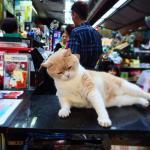 Foto de Tsim Sha Tsui East