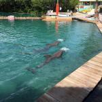 Photo of Miami Seaquarium