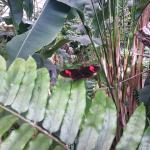 Photo de Butterfly Park of Benalmadena