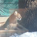 Photo de Big Bear Alpine Zoo at Moonridge