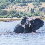 Chobe National Park Foto