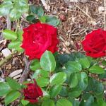 Photo de Rose Garden Inn